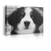 quadro cane prospettiva