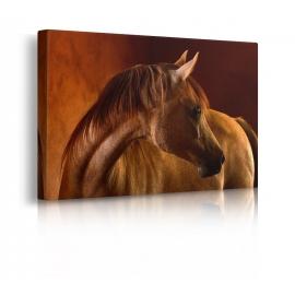 quadro cavallo prospettiva