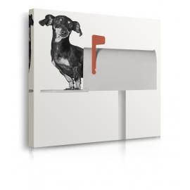 Quadro casetta della posta con cane prospettiva