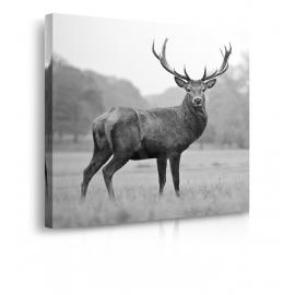 Quadro con cervo prospettiva