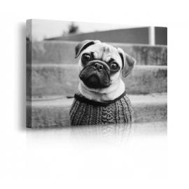 Quadro cane vestito prospettiva