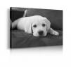 Quadro con cane bianco prospettiva