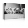 Quadro con gatti prospettiva