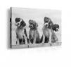 quadro wonder dogs prospettiva