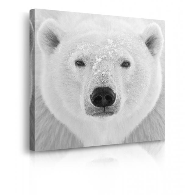 Quadro orso polare prospettiva