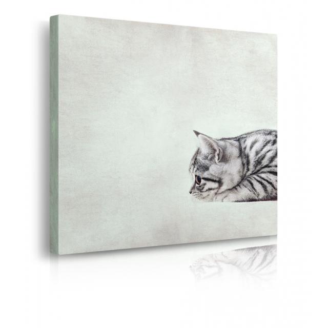 Quadro con gatto prospettiva