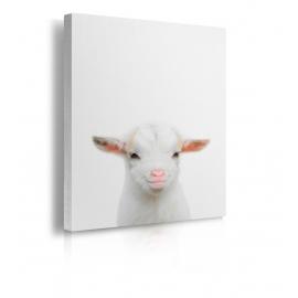 Quadro con testa di pecora prospettiva