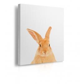 Quadro con testa di coniglio prospettiva