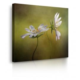 quadro fiori bianchi prospettiva