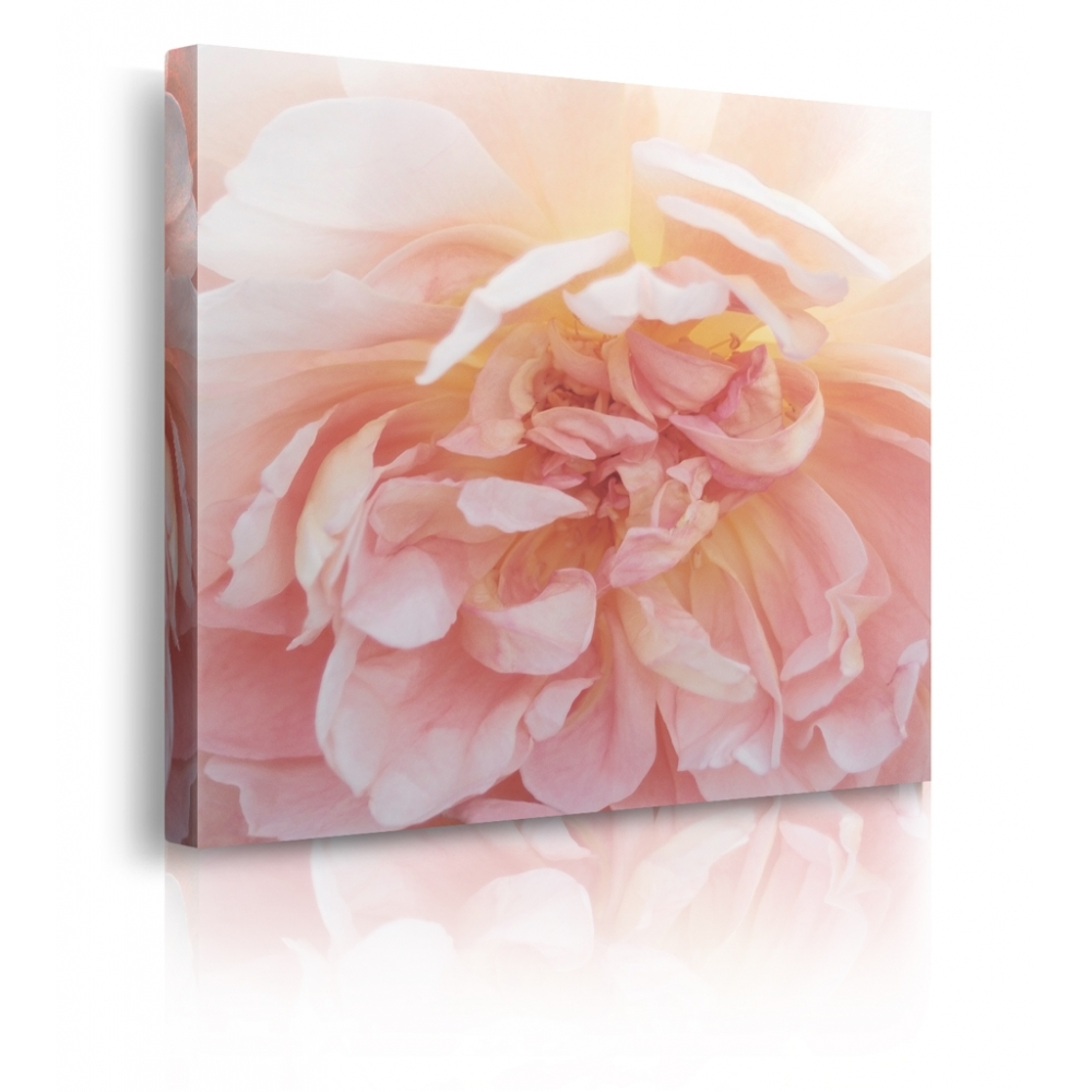 Quadro Heavenly Rose - 50x50 cm Stampa su TELA T1