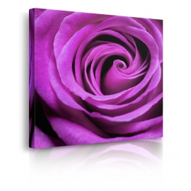 Quadro Purple Rose