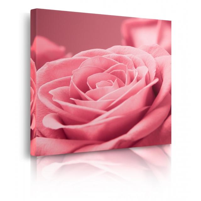 Quadro con rose rosa prospettiva