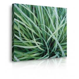 Quadro con erba vera prospettiva