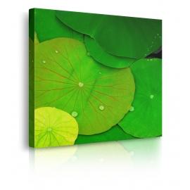 Quadro con foglie vere prospettiva