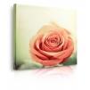 quadro fiori rosa prospettiva