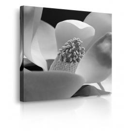 fiore di fibonacci prospettiva