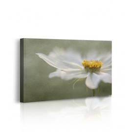Quadro stampa su tela fiori prospettiva