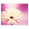 quadro fiori magenta