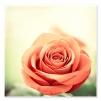 quadro fiori rosa