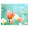 Quadro tulipani rosa