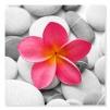 Quadro fiore rosa