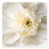 Quadro con fiori bianchi