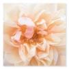 Quadro con fiori rosa