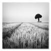 Quadri in bianco e nero paesaggi