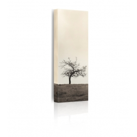 quadro alberi prospettiva