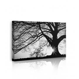 Quadro albero bianco e nero propsettiva