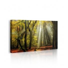 Quadro con alberi autunnali prospettiva