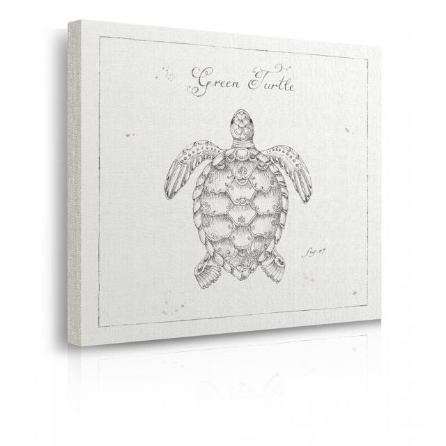 quadro tartaruga marina prospettiva