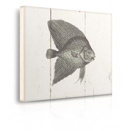 Quadro pesce prospettiva