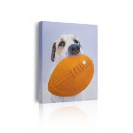 Quadro cane con pallone ovale prospettiva