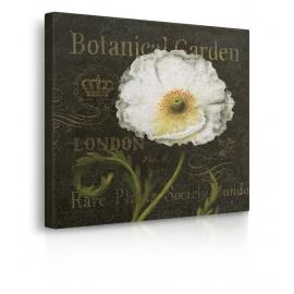 Quadro fiore bianco prospettiva
