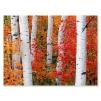 Quadro paesaggio tronchi con foglie