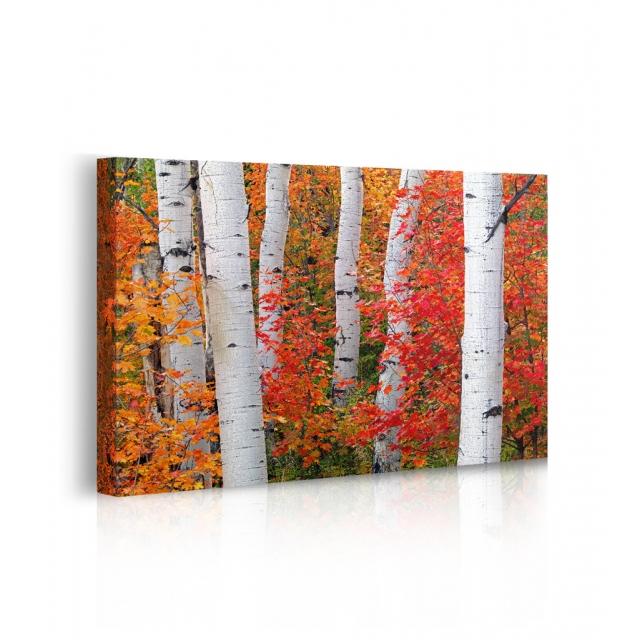 Quadro paesaggio tronchi con foglie prospettiva