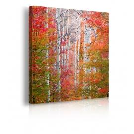 Quadro Autumn Passage